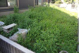 表面の土や雑草など障害物を剥ぎ取り、下地をつくります。